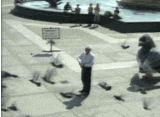 Aggressiv kjempe-due last ned